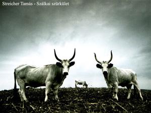 tarka1.jpg